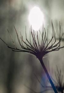 stekel-met-zon
